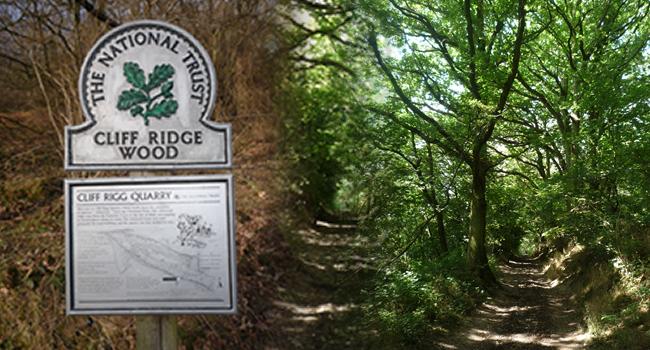 Cliff Ridge Woods Great Ayton